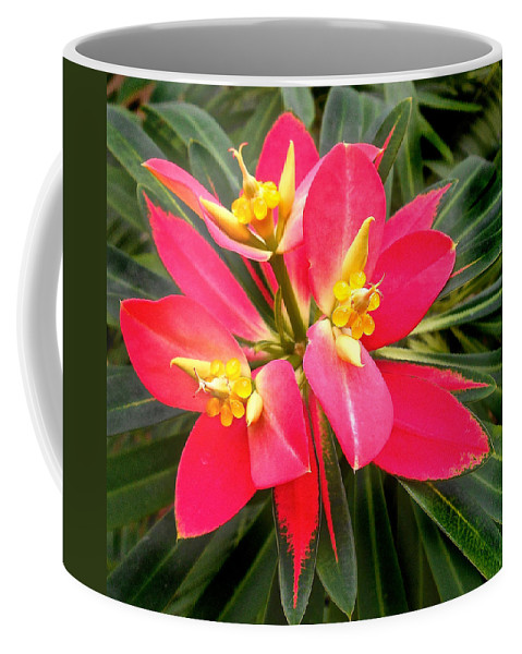 Beautiful Coffee Mug featuring the photograph Exotic Red Flower by Joan Reese