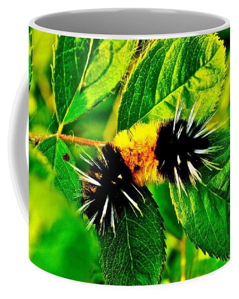 Caterpiller Coffee Mug featuring the photograph Exploring Possibilities by Jim Hogg