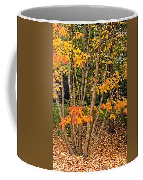 Woods Coffee Mug featuring the photograph Exuberance by Steve Harrington