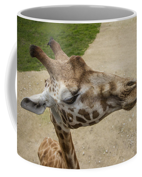 Clare Bambers Coffee Mug featuring the photograph Eye Level. by Clare Bambers