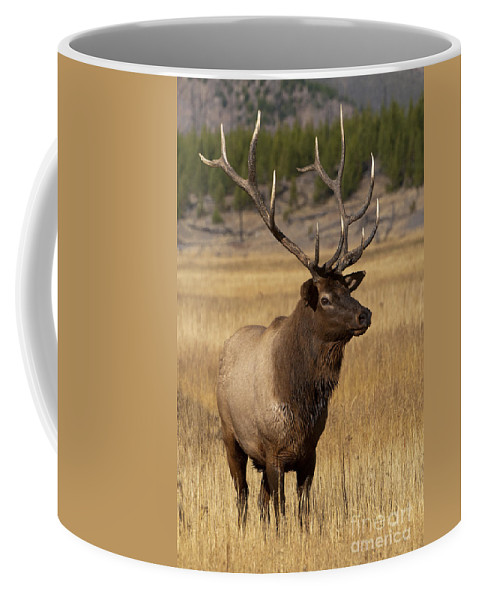 Yellowstone Coffee Mug featuring the photograph Eyeing The Harem by Sandra Bronstein
