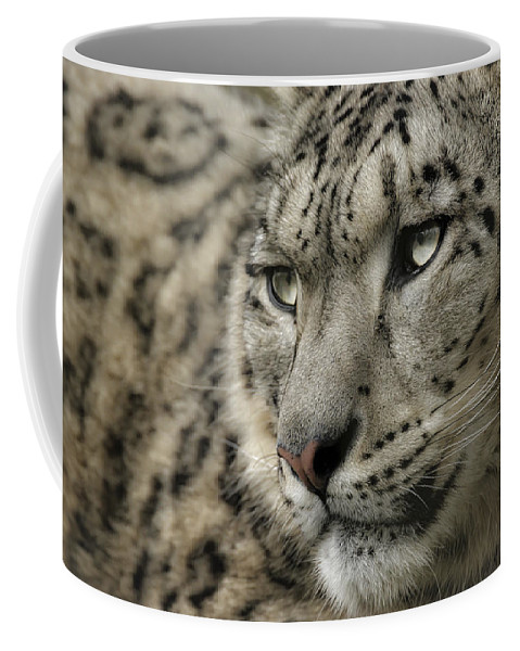 Snow Leopard Coffee Mug featuring the photograph Eyes Of A Snow Leopard by Chris Boulton