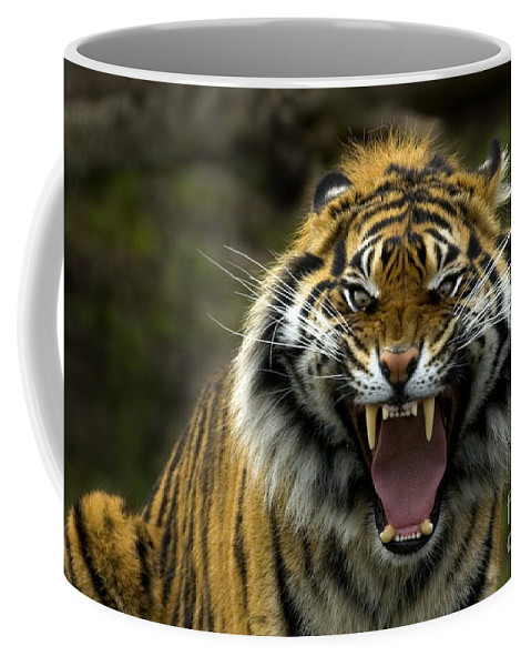 Tiger Coffee Mug featuring the photograph Eyes Of The Tiger by Mike Dawson