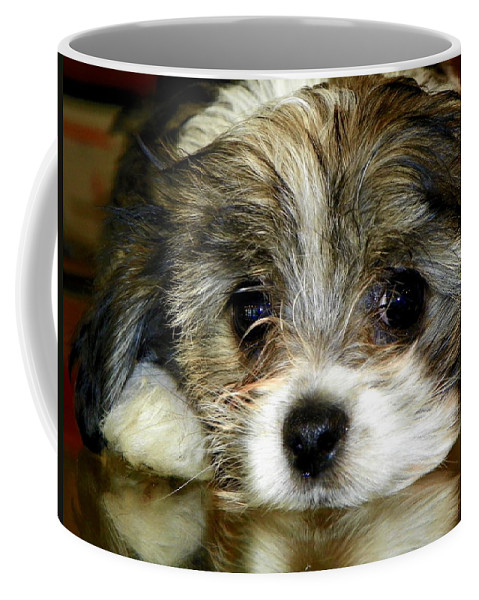 Puppies Coffee Mug featuring the photograph Eyes On You by Karen Wiles