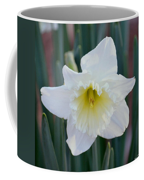 Face Of A Daffodil Coffee Mug featuring the photograph Face Of A Daffodil by Maria Urso