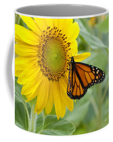 Sunflower Coffee Mug featuring the photograph Face To Face by Ann Horn