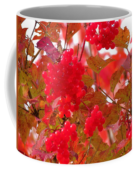 Leaves Coffee Mug featuring the photograph Fall 08-008 by Mario MJ Perron