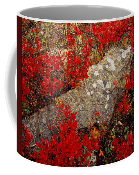 Maine Coffee Mug featuring the photograph Fall Blueberries And Moss-h by Tom Daniel