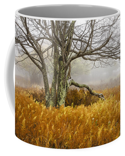 West Virginia Coffee Mug featuring the photograph Fall Ferns And Fog by Bill Swindaman
