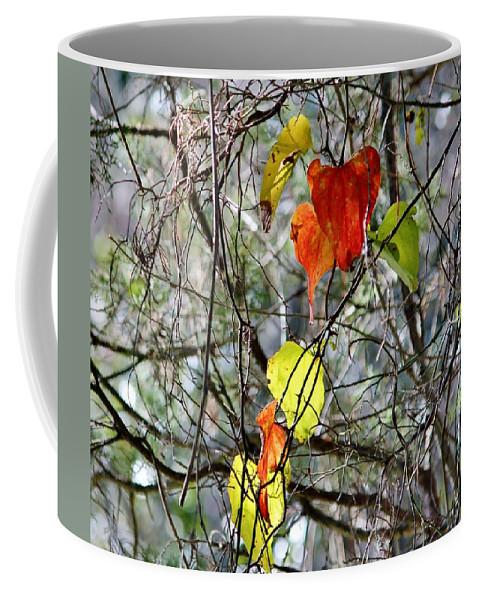 Fall Coffee Mug featuring the photograph Fall Leaves by Cynthia Guinn
