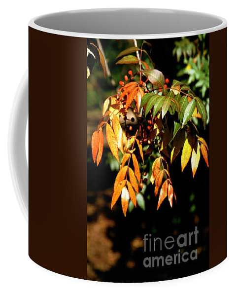 Fall Color Coffee Mug featuring the photograph Fall Leaves by Kathy McClure