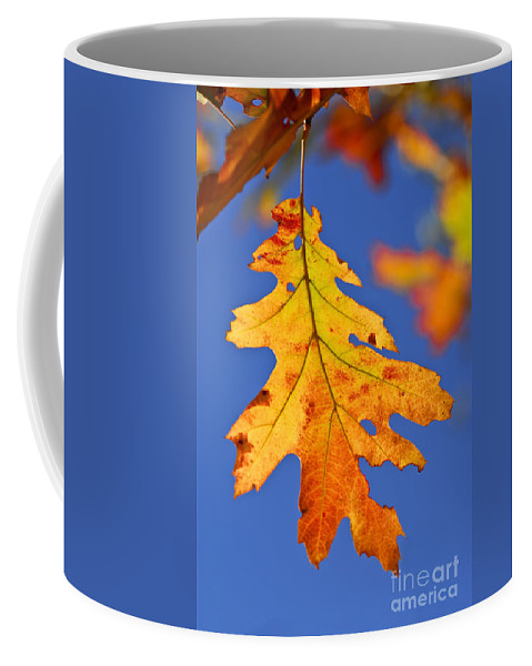 Autumn Coffee Mug featuring the photograph Fall Oak Leaf by Elena Elisseeva