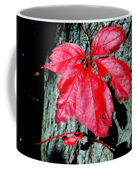 Nature Coffee Mug featuring the photograph Fall Red Leaf by Ed Weidman