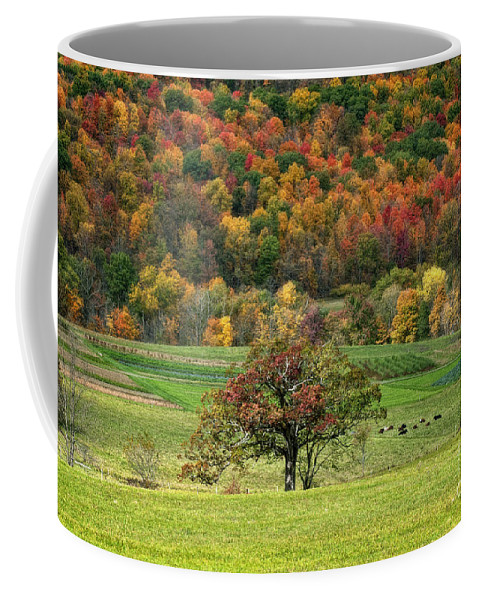 Autumn Coffee Mug featuring the photograph Fall Splendor by Claudia Kuhn