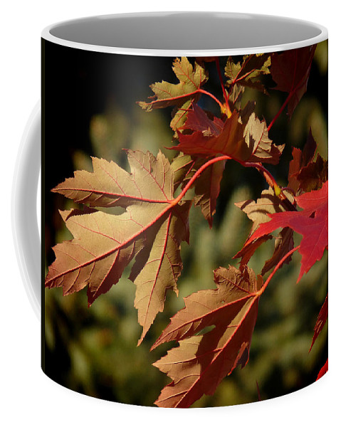 Autumn Coffee Mug featuring the photograph Fall Underside Beauty by Lucinda Walter