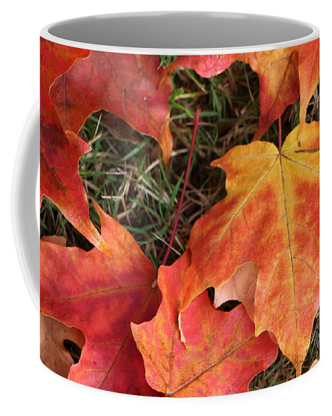 Leaves Coffee Mug featuring the photograph Fallen Leaves by Brigitte Mueller