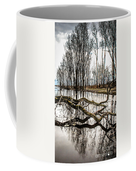 Living Trees Coffee Mug featuring the photograph Fallen Tree Reflection by Grace Grogan