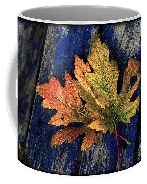 Nature Coffee Mug featuring the photograph Falling For Colour by Linda Sannuti