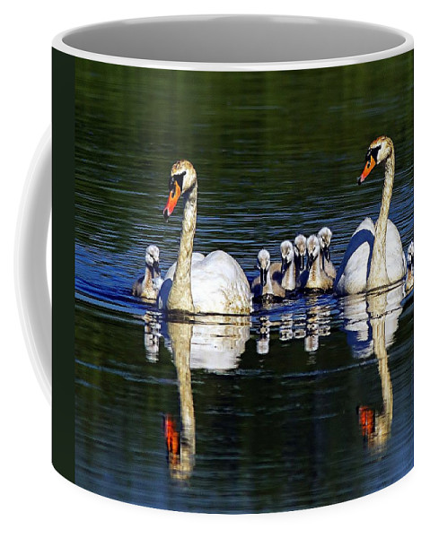 Swans Coffee Mug featuring the photograph Family Outing by Davids Digits