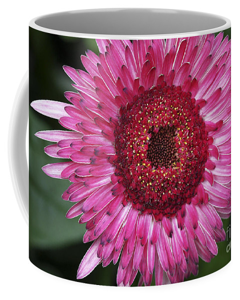 Flower Coffee Mug featuring the photograph Fancy Pink Daisy by Deborah Benoit