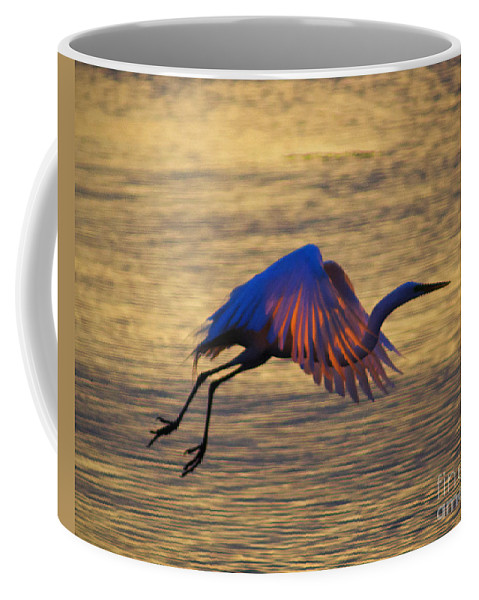 Egret Coffee Mug featuring the photograph Feather-light by Joe Geraci