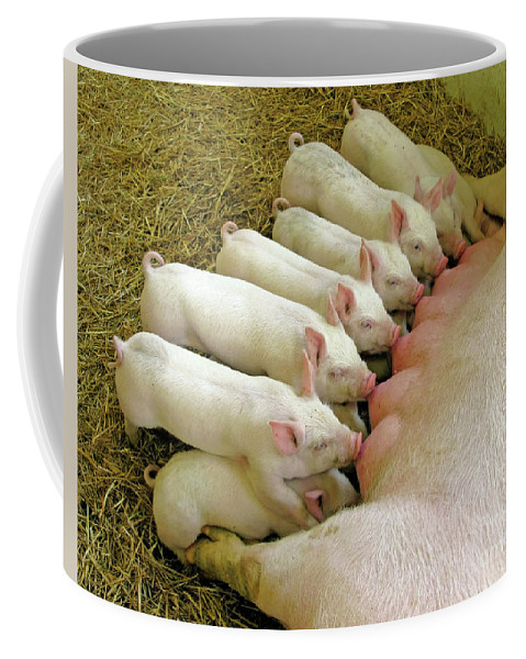 Pig Coffee Mug featuring the photograph Feeding The Family by Ann Horn