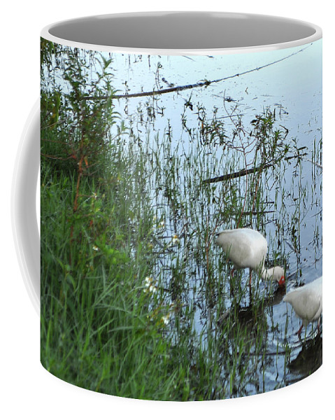 Ibis Coffee Mug featuring the photograph Feeding Time by Mickey Krause