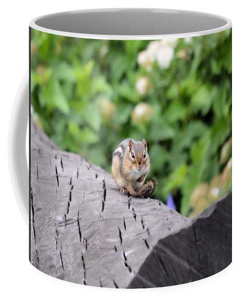 Chipmunk Coffee Mug featuring the photograph Feeling Chipper by Bonfire Photography