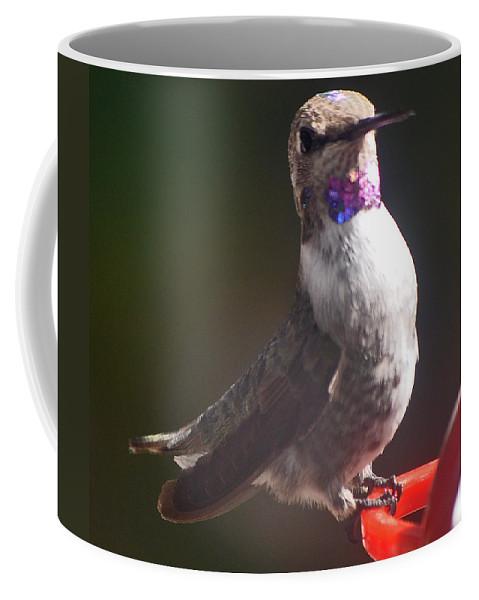 Hummingbird Coffee Mug featuring the photograph Female Anna On Perch by Jay Milo