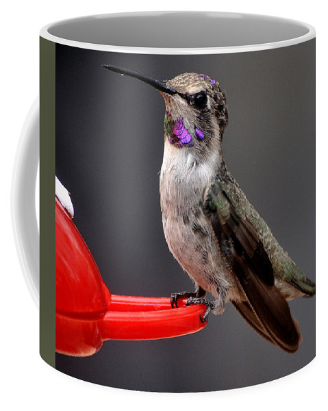 Animal Coffee Mug featuring the photograph Female Anna's Hummingbird On Perch Posing For Her Supper by Jay Milo