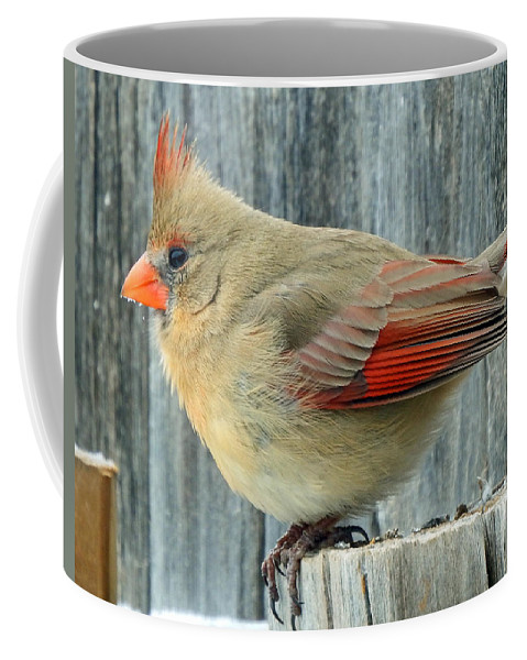 Female Coffee Mug featuring the photograph Female Cardinal by David G Paul