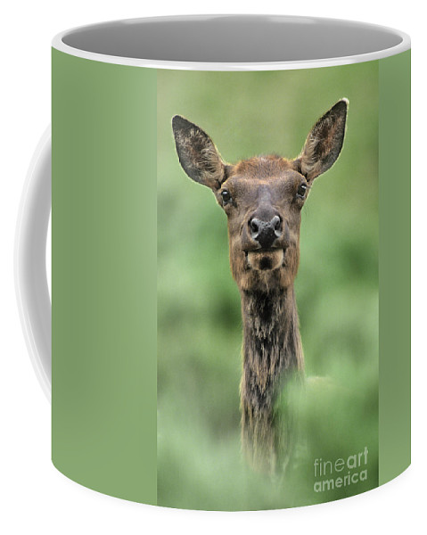 North America Coffee Mug featuring the photograph Female Elk Portrait Yellowstone National Park Wyoming by Dave Welling