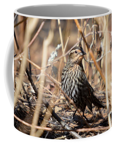 Red-winged Blackbird Coffee Mug featuring the photograph Female Red-winged Blackbird by Thomas Phillips