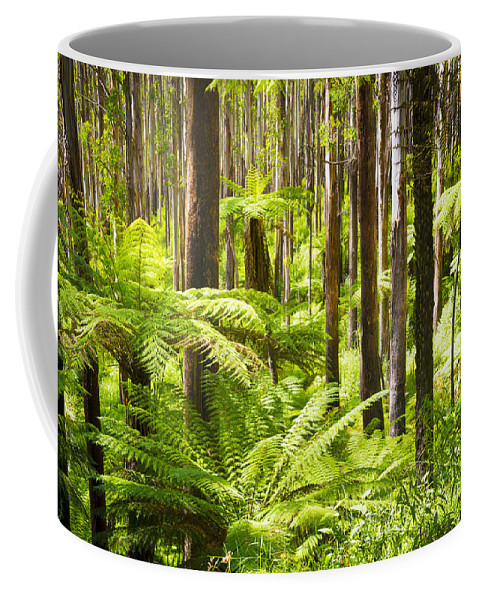 Black Coffee Mug featuring the photograph Fern Forest by Tim Hester