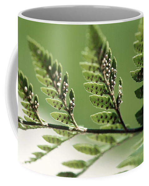 Plants Coffee Mug featuring the photograph Fern Seeds by Lisa Knechtel