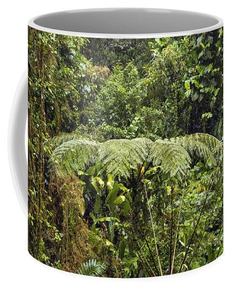 Salvatura Park Monteverde Costa Rica Rainforest Fern Ferns Tree Trees Branch Branches Leaves Leaves Plant Plants Nature Forest Forests Rainforest Rainforests Coffee Mug featuring the photograph Fern Umbrella by Bob Phillips