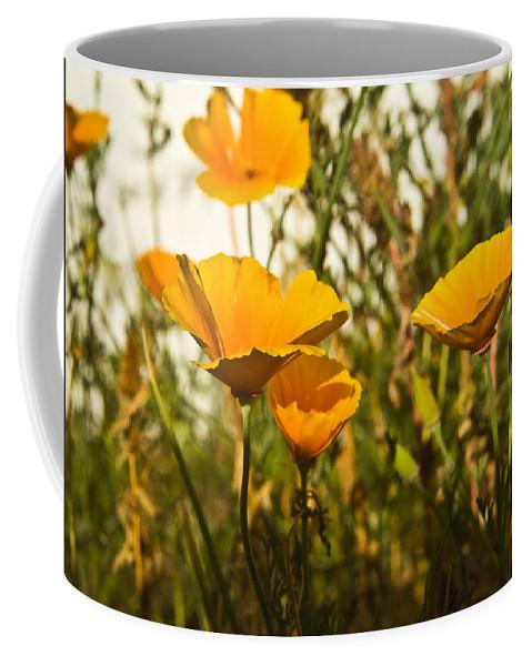 Poppy Coffee Mug featuring the photograph Field Of Yellow Poppies by Douglas Barnett