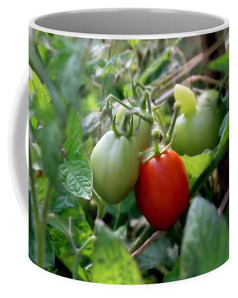 Tomato Coffee Mug featuring the photograph First Place by Kenny Glotfelty