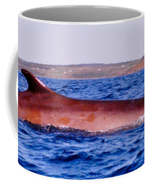 Whales Coffee Mug featuring the photograph First Sighting Of The Summer by Lydia Holly