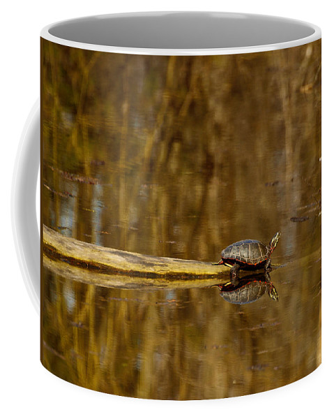 Painted Turtle Coffee Mug featuring the photograph First Turtle by Thomas Young