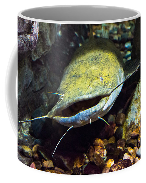 Bill Pevlor Coffee Mug featuring the photograph Fish Lips by Bill Pevlor