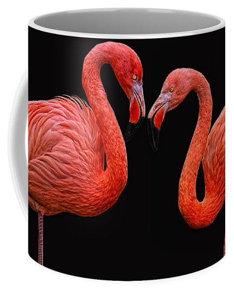 Animals Coffee Mug featuring the photograph Flamenco ... Baby by Joachim G Pinkawa