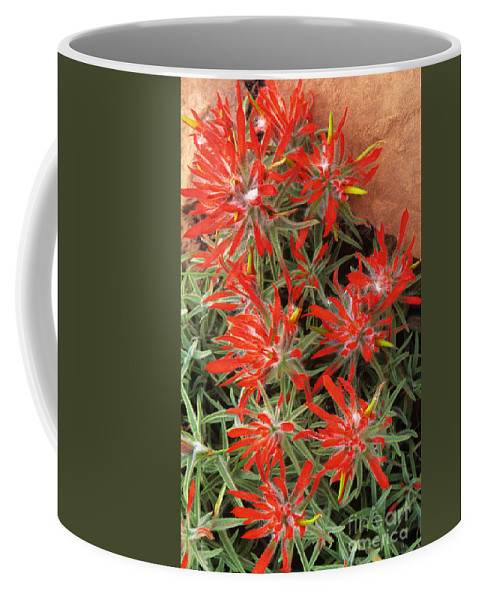 Zion Paintbrush Coffee Mug featuring the photograph Flaming Zion Paintbrush Wildflowers by Dave Welling
