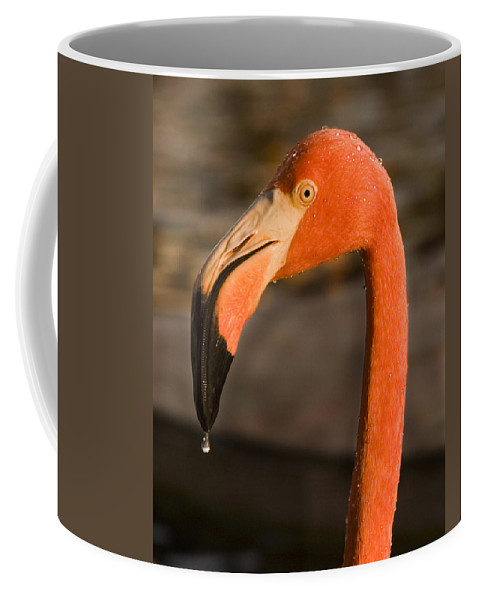 3scape Coffee Mug featuring the photograph Flamingo by Adam Romanowicz