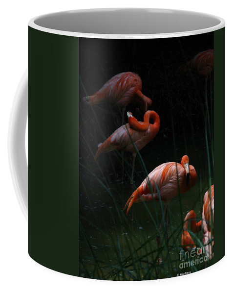 Art For The Wall...patzer Photography Coffee Mug featuring the photograph Flamingo Morning by Greg Patzer