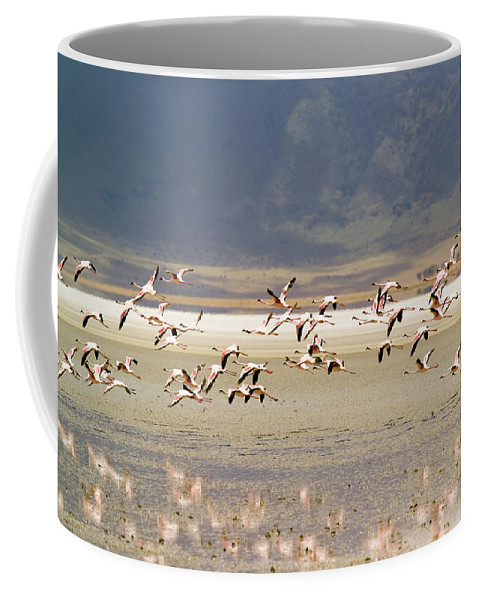 Action Coffee Mug featuring the photograph Flamingos Flying Over Water by Jonathan Kingston
