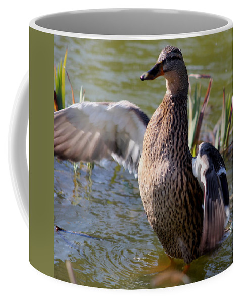 Duck Coffee Mug featuring the photograph Flap Those Wings by Perggals - Stacey Turner