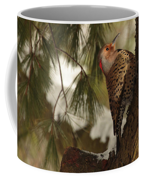 Bird Coffee Mug featuring the photograph Flicker by Everet Regal