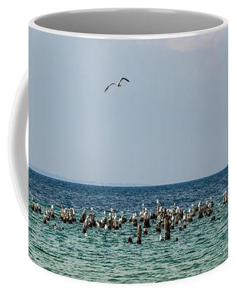 Michigan Coffee Mug featuring the photograph Flock Of Seagulls by Sebastian Musial