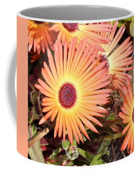 Flowers Coffee Mug featuring the photograph Floral by Cathy Mahnke